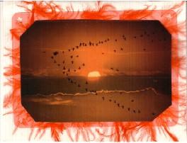 orangedecoholics32002.jpg